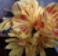 Каковы особенности строения цветка