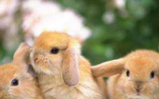 Как назвать кролика мальчика