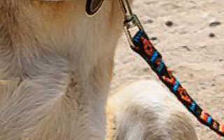 Что делать когда у собаки болит живот
