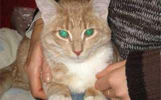 Как проявляется цистит у кошек
