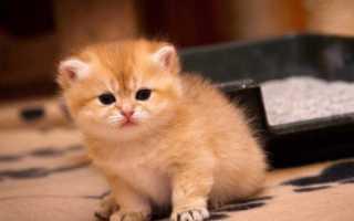 Как приучить котёнка пить воду
