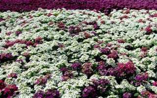 Какие цветы нужно сажать под зиму