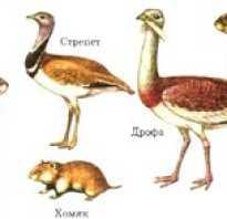 Какие животные обитают в степи