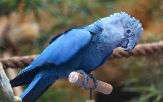 Как называются большие попугаи