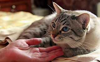 У кошки недержание мочи что делать