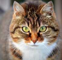 Почему у котенка температура