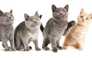Можно ли стерилизовать кошку в 10 лет