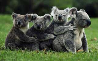 Какие существуют животные в Австралии
