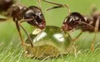 Какое значение деятельности муравьев