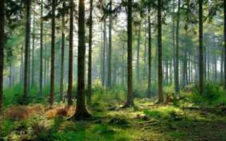 Что происходит в листьях при дыхании