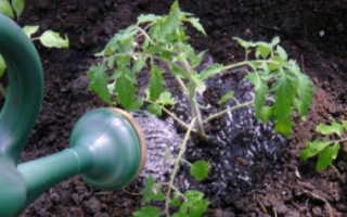 Как поливать помидоры в огороде