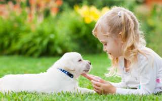 Какие породы собак для детей лучше