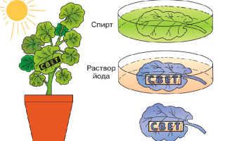 Выделяют ли кислород водные растения