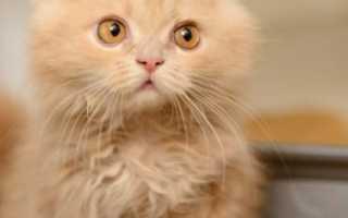 Как вылечить запор у котенка
