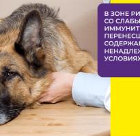 Как лечить коронавирус у собак