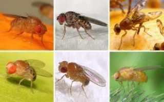 Как защитить собаку от комаров