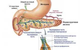 Какова функция поджелудочной железы