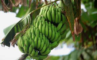 В чем польза бананов для организма