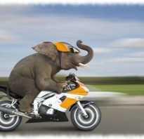 Какое животное самое быстрое в мире