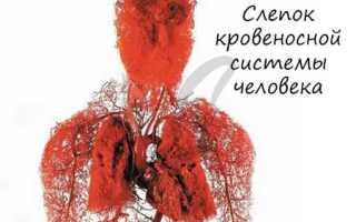 Куда поступает артериальная кровь