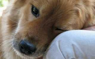 Как умирают собаки от старости